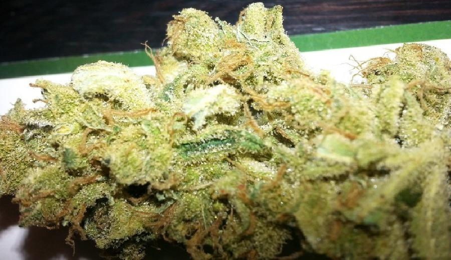 Amnesia Gangster weed